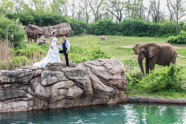 nashville zoo, luxury wedding nashville, outdoor, african themed, safari, wedding 101